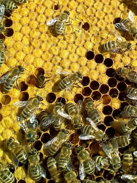 WP_2017 abeilles sur cadre.jpg