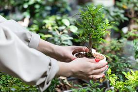 woman-choosing-potted-plants-decorative
