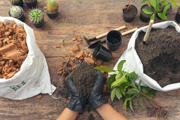 closeup-picture-gardener-s-hands-plantin