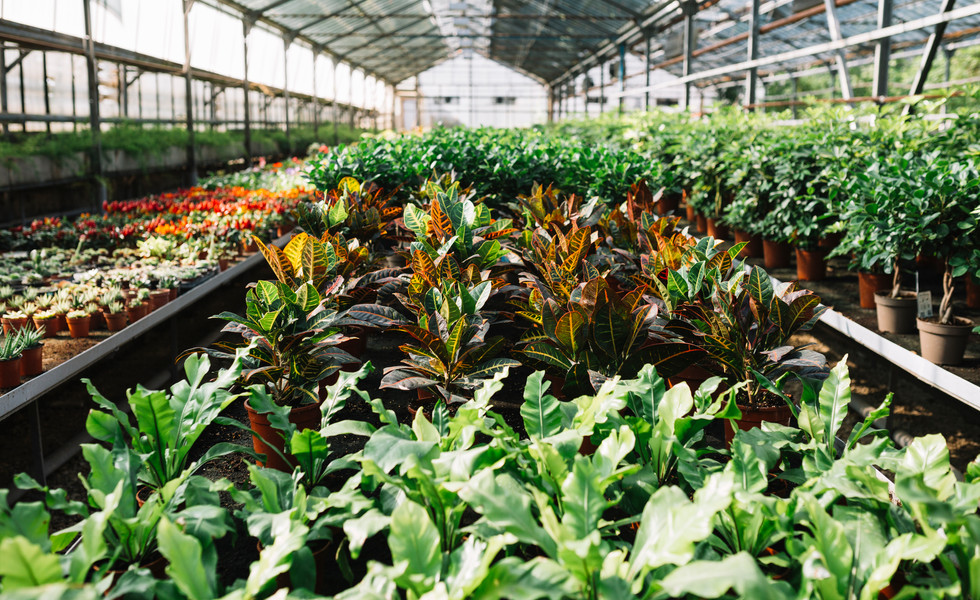potted-plants-growing-greenhousejpg