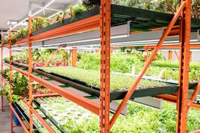 shelves-with-green-seedlings-various-sor