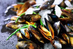 mussels-mollusks-seaweed-sea-plants-ice