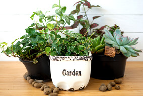 collection-various-indoor-plants-fittoni