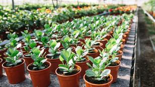 many-fresh-green-plants-potjpg