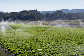 irrigation-system-action-vegetable-plant