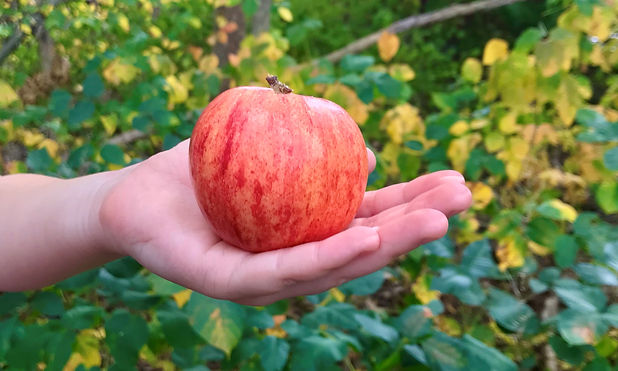 charlotte apple.jpg