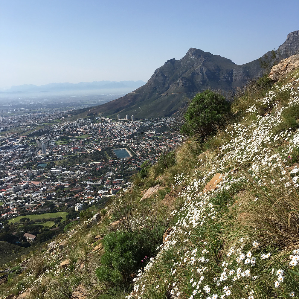City of Cape Town from Devil's Peak