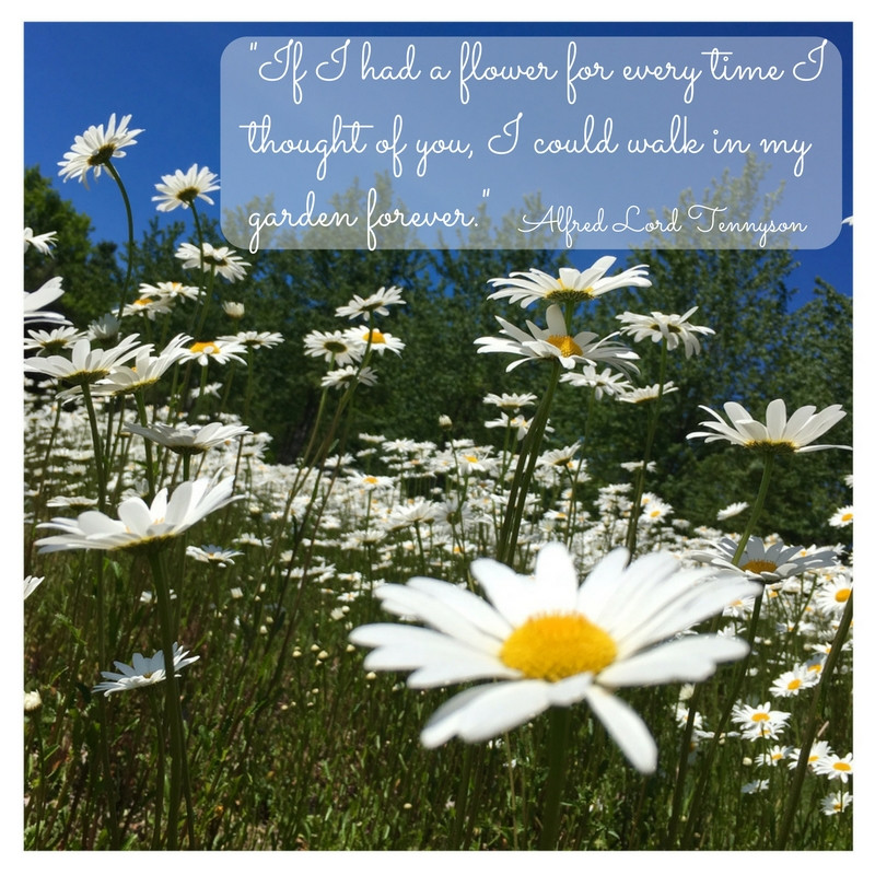 Love and flower quote