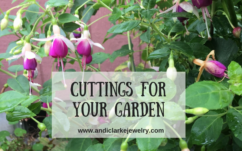 Blog post on using plant cuttings for your garden.