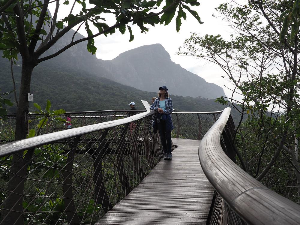 Boomslang tree canopy bridge in Kirstenbosch gardens