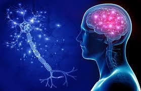 Neurología - Dr. Badawi