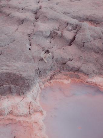 pink2klein.jpg