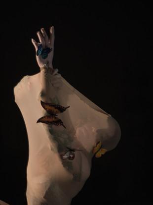 butterfly_10 (1 von 8).jpg