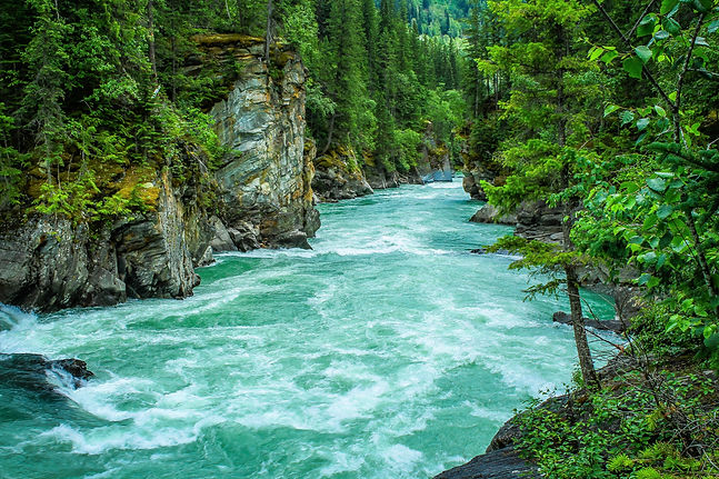 river-between-green-leafed-tree-1766838.
