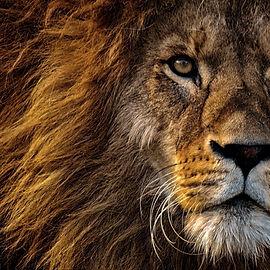 a-lion-head.jpg