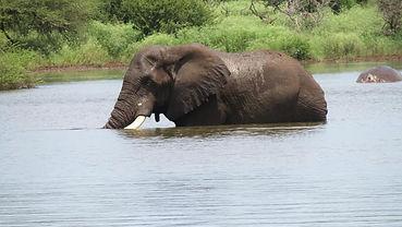 elephant-in-river.jpg