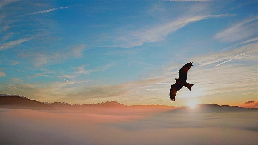 silhouette-of-bird-above-clouds-755385_e