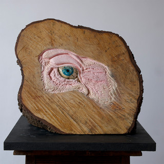 Young Pig'sEye