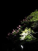 blossoming_edited_edited.jpg