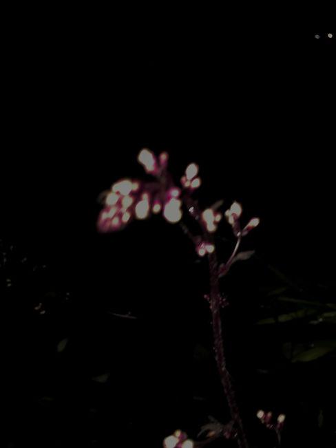 blue roses_edited_edited.jpg
