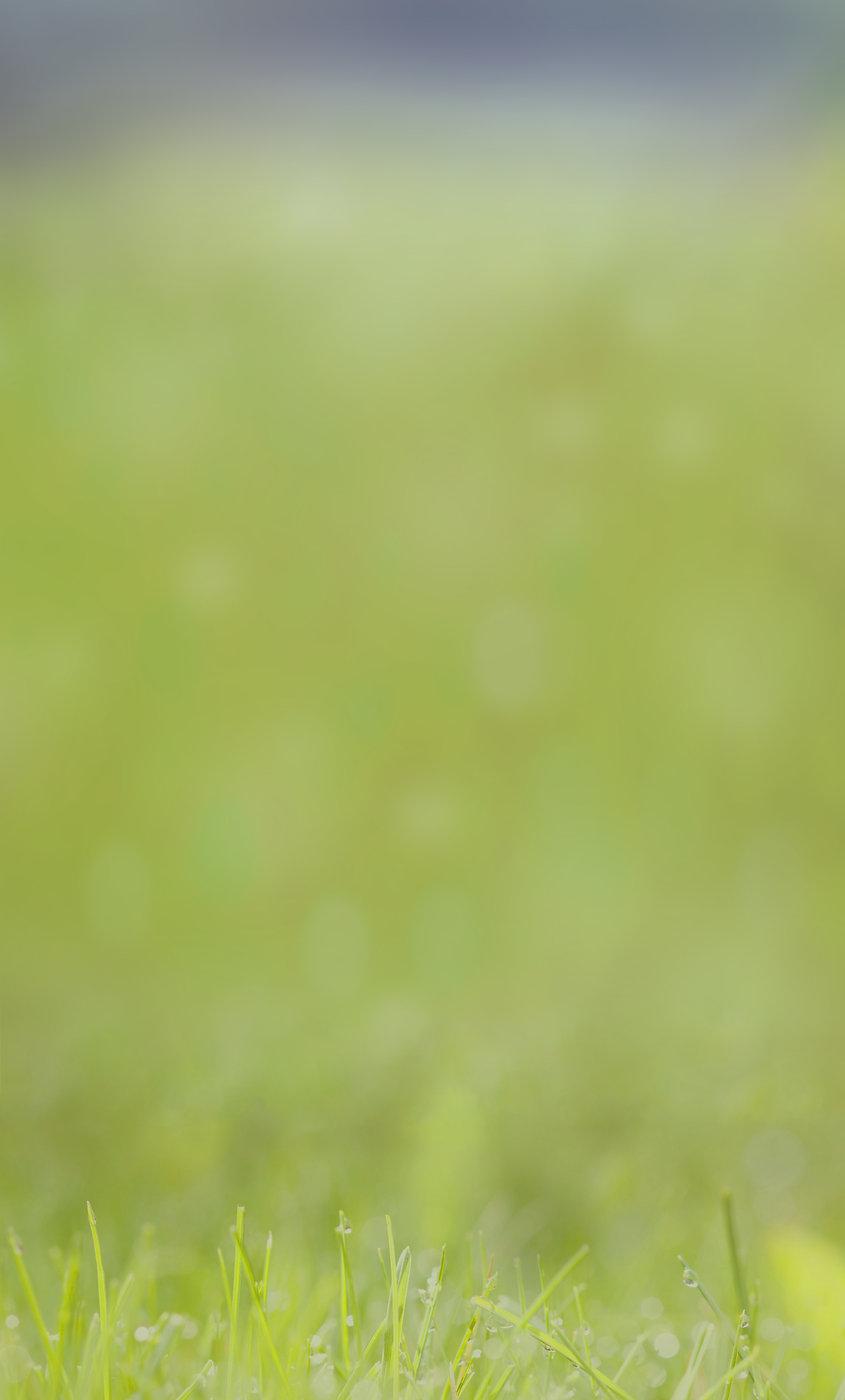 gras-hintergrund2.jpg