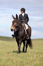 Foxhunting for All Breeds