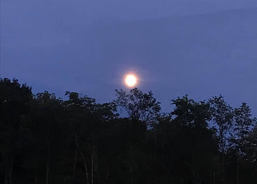 moonlight ride 1.jpg
