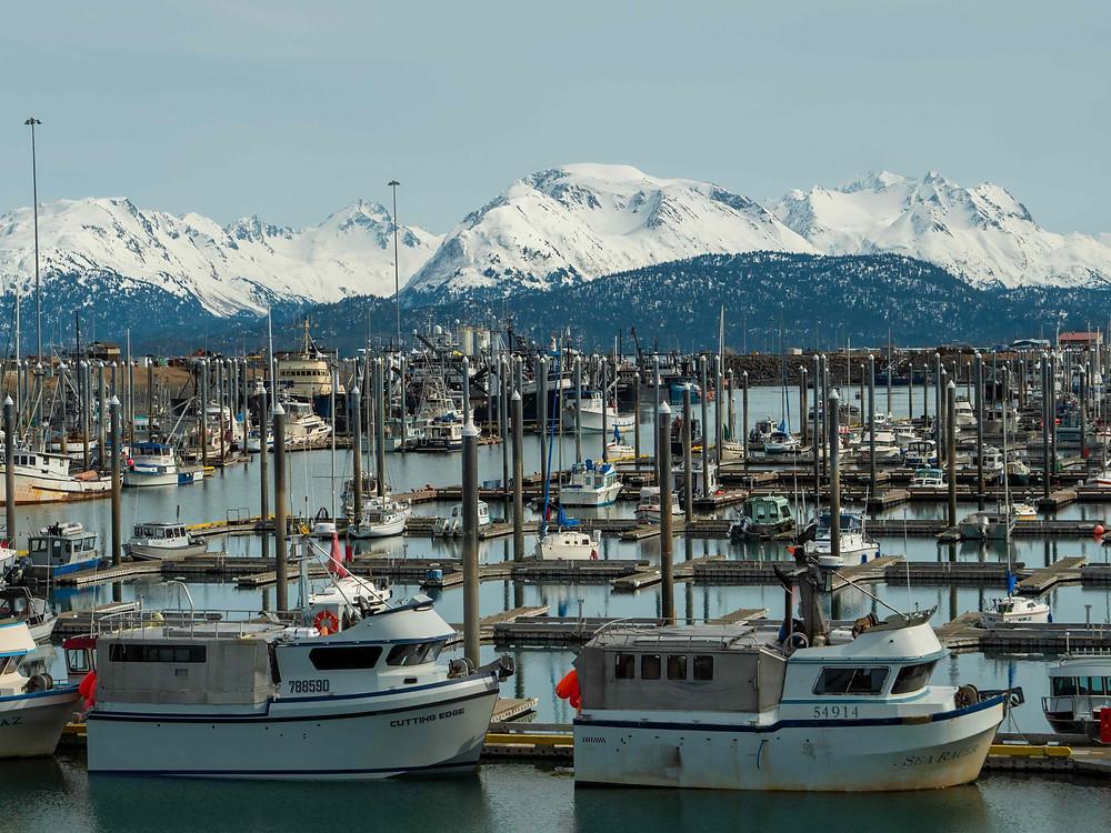 The Homer Harbor.