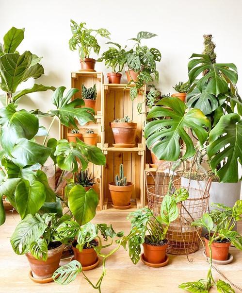 Planttrekkers urban jungle