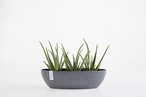 Ecopots Sofia Long small flower and herb pot in Grey
