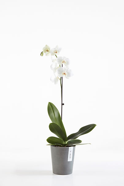 Ecopots Morinda flower pot for orchids in Grey