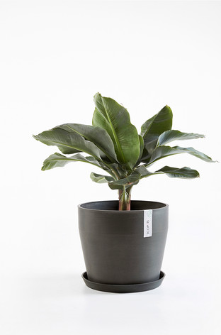 Ecopots Sankara with saucer in Dark Grey