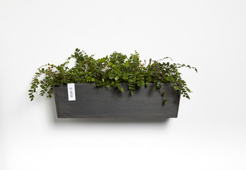 Ecopots Manhattan Wall L in Dark Grey