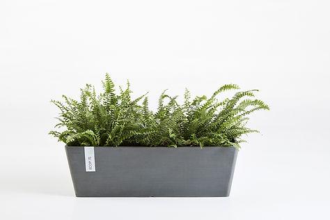 Ecopots Bruges rechthoekige plantenbak in grijs met planten