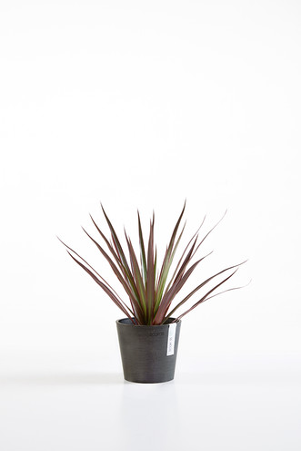 Ecopots Amsterdam13 in Dark Grey