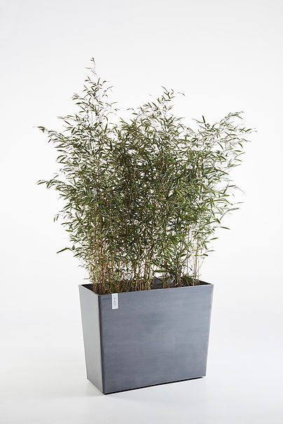 Ecopots Paris large rectangular planter with plants