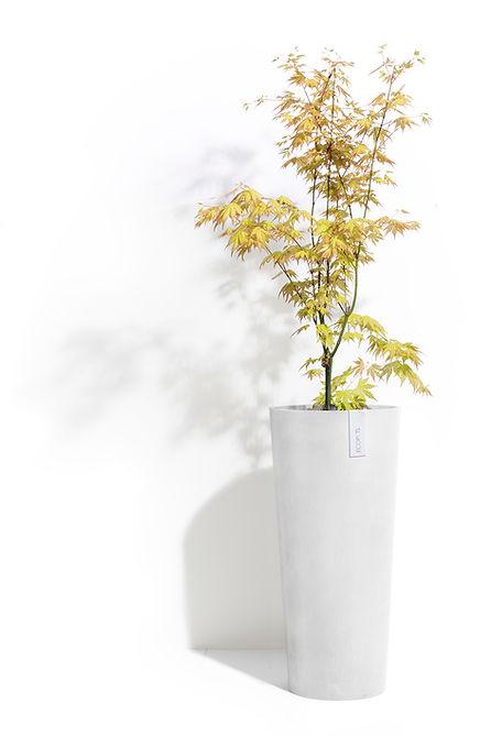 De ECOPOTS collectie, tijdloze bloempotten en plantenbakken voor binnen en buiten