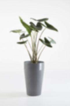 Ecopots Sankara tall flower pot with plant in Grey