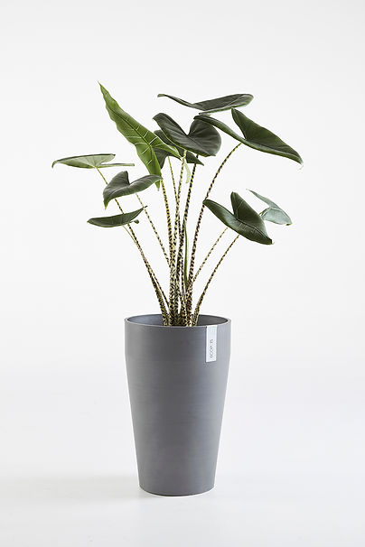 Ecopots Sankara tall flower pot with plant in Grey