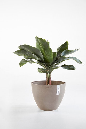 Ecopots Antwerp in Taupe