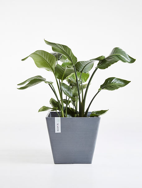 Ecopots Rotterdam 40 Grey square flower pot wit plant