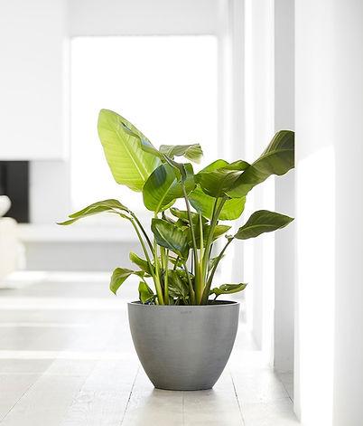 Ecopots Antwerp plant pot in a minimalis