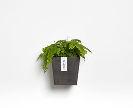 Ecopots Manhattan small wall planter in Dak Grey