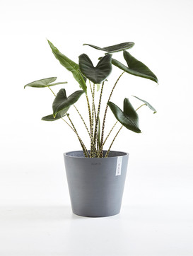 Ecopots Amsterdam in Blue Grey