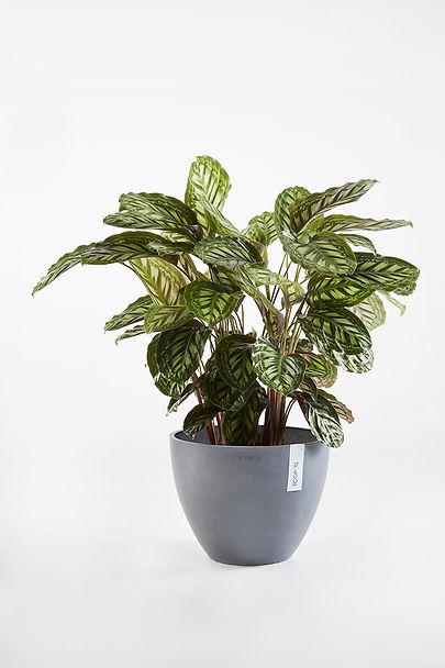 Ecopots Antwerp ronde bloempot met plant