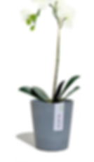 ECOPOTS Morinda, de bloempot speciaal voor orchideeën