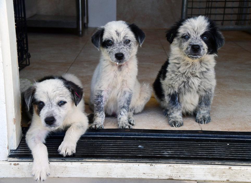 DOGWOOD1-Puppies.jpg