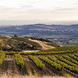 Vineyard view.jpeg