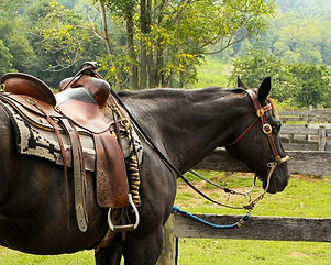 saddlery supplies, reins, bridles and