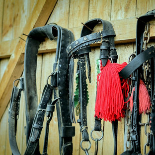 Reins, halters, leads - the lot!  Come and see what we have in store.